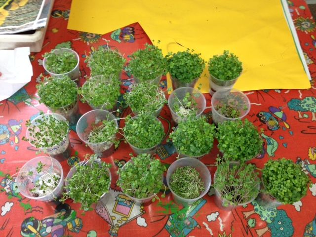 Growing Sprouts in 2B